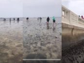 Tampa Residence's Awaken From Hurricane Irma To See That The Ocean Is Gone! #iShitUNot (Video)