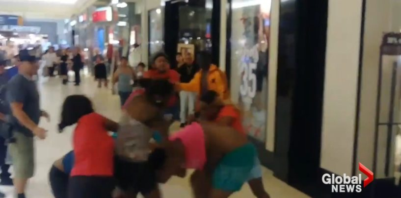 Pack Of BT-1100 Hairhats Brawl Each Other At A Florida Mall With Jiffy Pop Bag & Toddler In Tow! (Video)